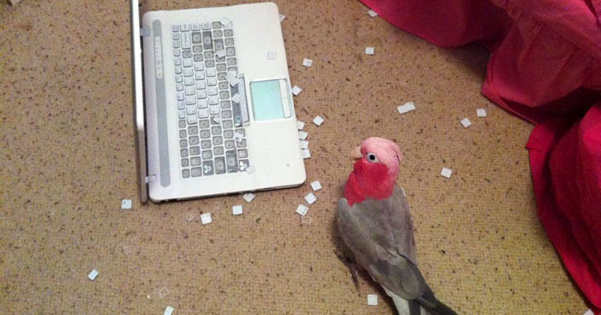109 Times Birds Acted Like Suck Jerks, People Had To Shame Them On The Internet