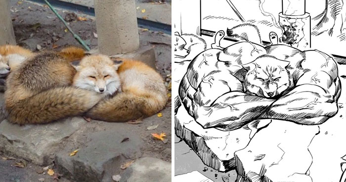 10 Times People Thought They Were Seeing Buff Animals, But They Were Optical Illusions