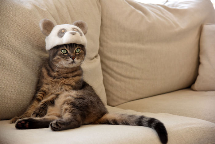 Cats-In-Hats-Made-From-Their-Own-Hair-Part-2
