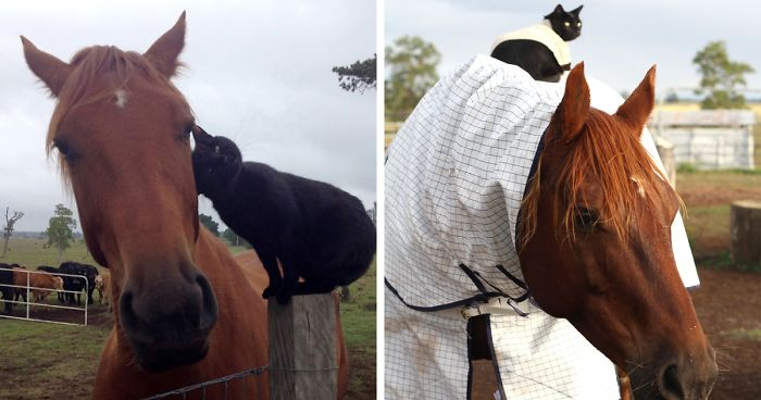 Here Are 22 Pics Of My Cat And Horse