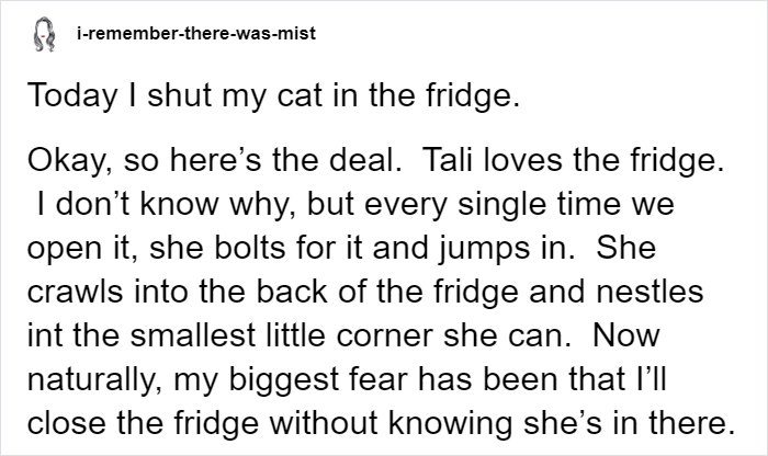Owner Accidentally Locks Her Cat In The Fridge, Cat Acts Like Nothing Happened When Found Moments Later