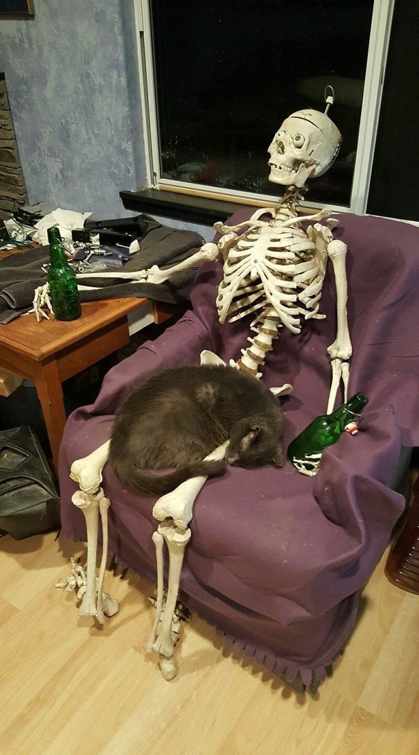 cat-on-skeleton-5d548f8ad199f.jpg