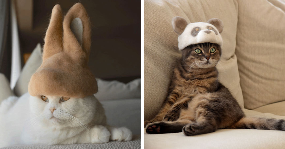 These Cats Have A Huge Collection Of Hats That Wouldn't Disappoint The British Queen