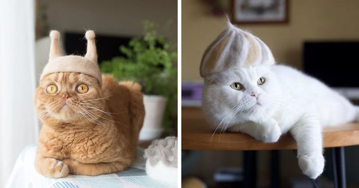 These Cats Have A Huge Collection Of Hats Made Out Of Their