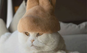 These Cats Have A Huge Collection Of Hats Made Out Of Their Shed Fur