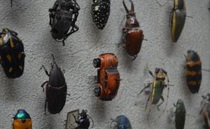 50 Exhibiciones de museos tan asombrosas que fueron compartidas online