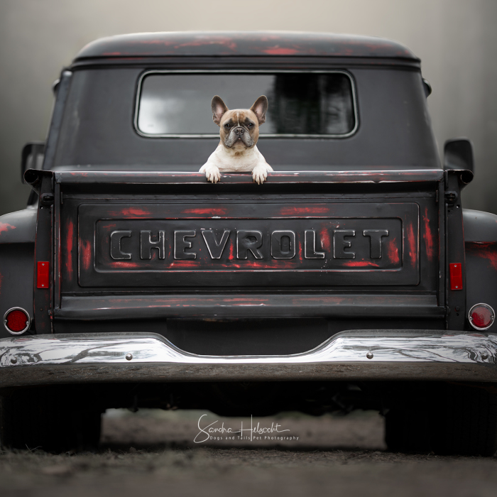 Dog Owners Are Buying Vintage Cars For Their Lazy Pets And I'm Getting To Photograph Them