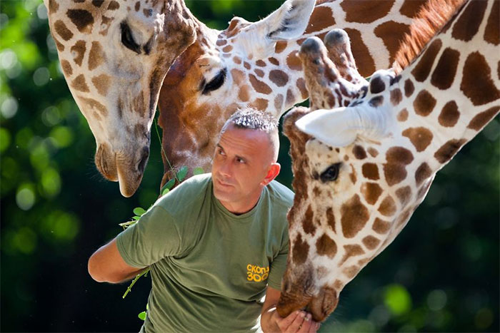10 Pics Of The Special Bond Between A Zookeeper And Giraffes That I Captured In North Macedonia