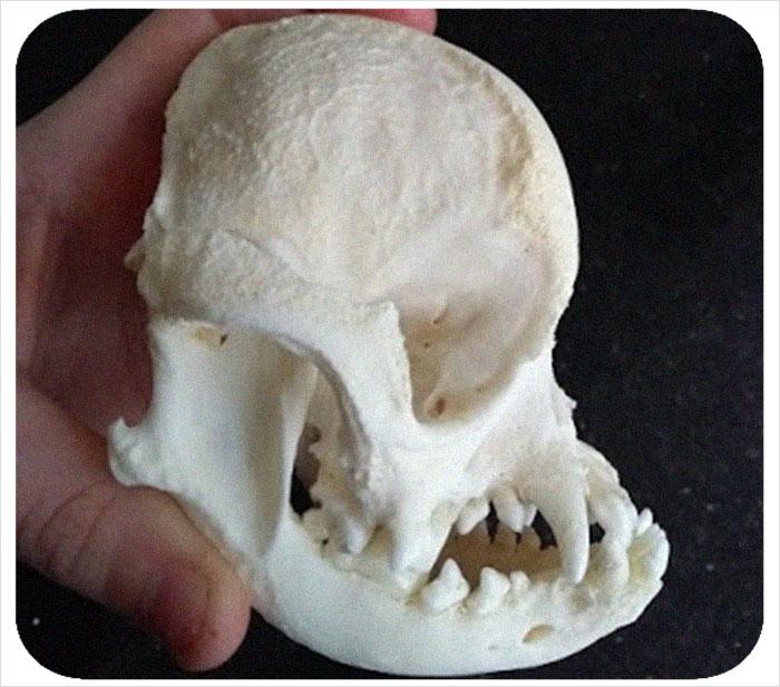 Best tbbp skeleton