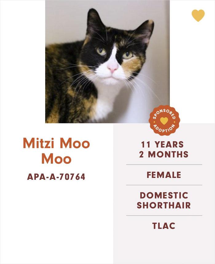 Funny-Cats-Names-Pet-Adoption-Austin-Pets-Alive