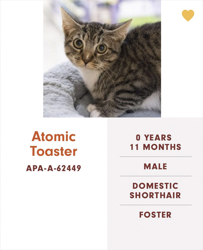 Funny-Cats-Names-Pet-Adoption-Austin-Pets-Alive