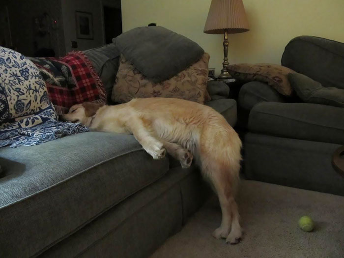 We Told Our Dog She Couldn't Sleep Up On The Couch