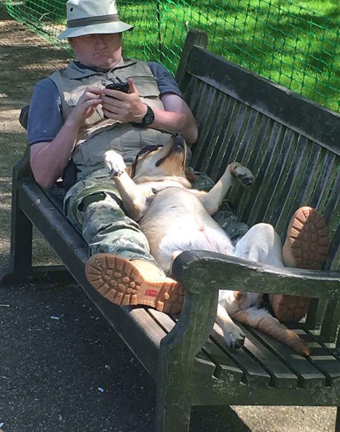 5 photos of Dog sleeping that will make you say Awwwwww 4
