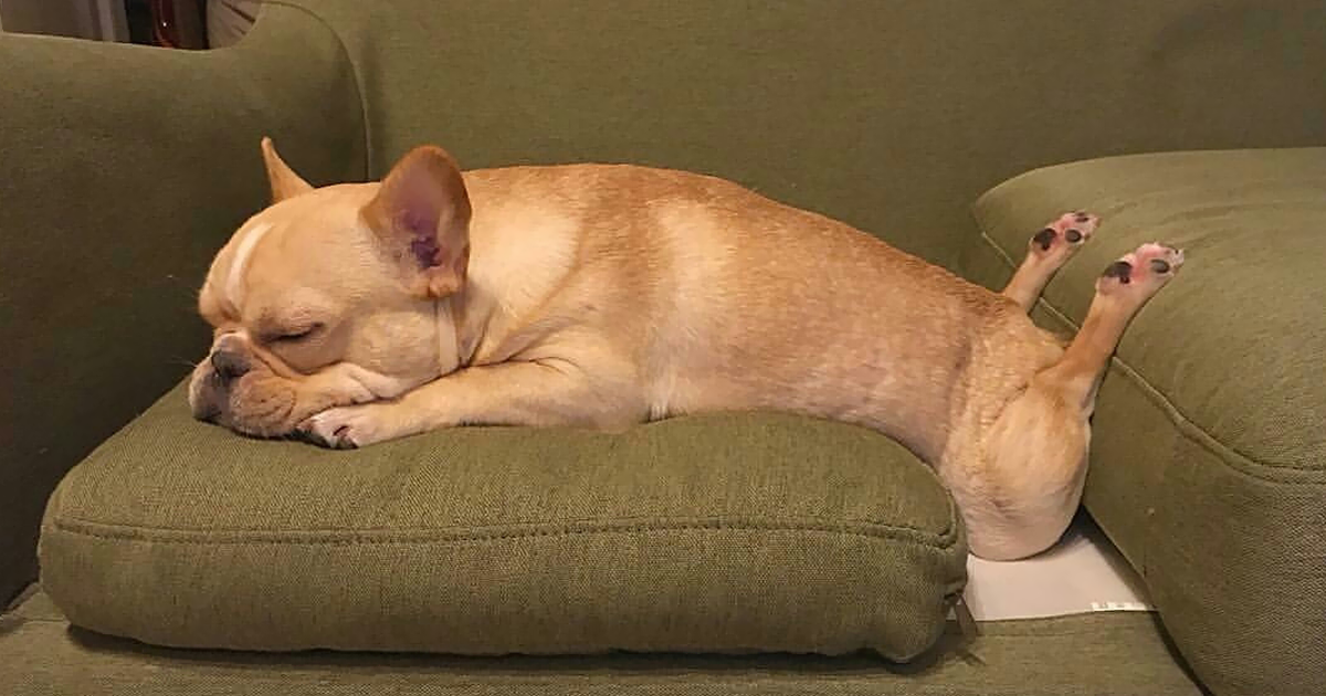 images of dogs sleeping in funny positions