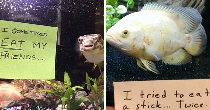 23 Hilarious Fish That Got Shamed Publicly For Being Naughty