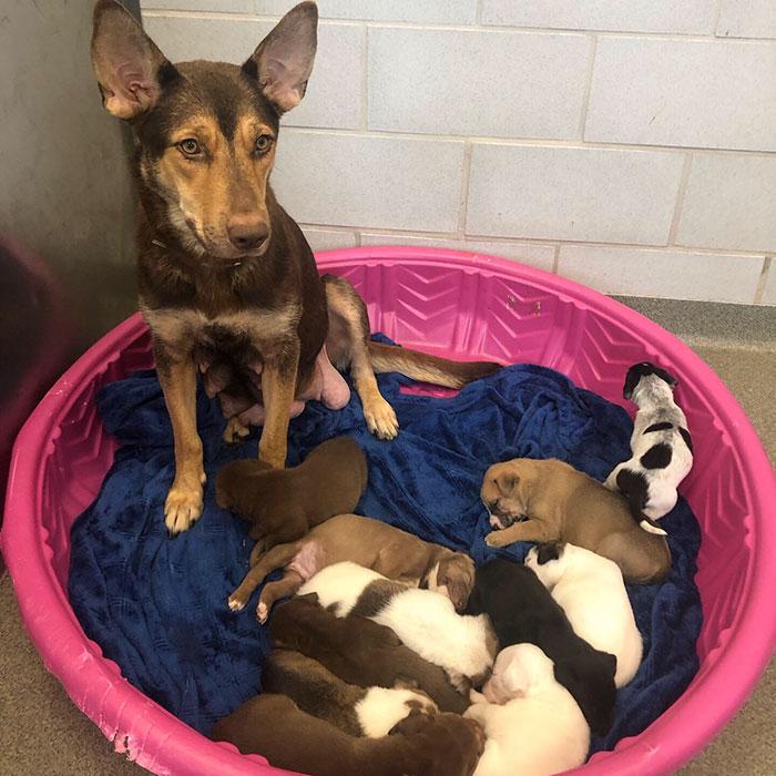 Zachráněné  štěně narozené s okouzlujícím knírem hledá milující domov