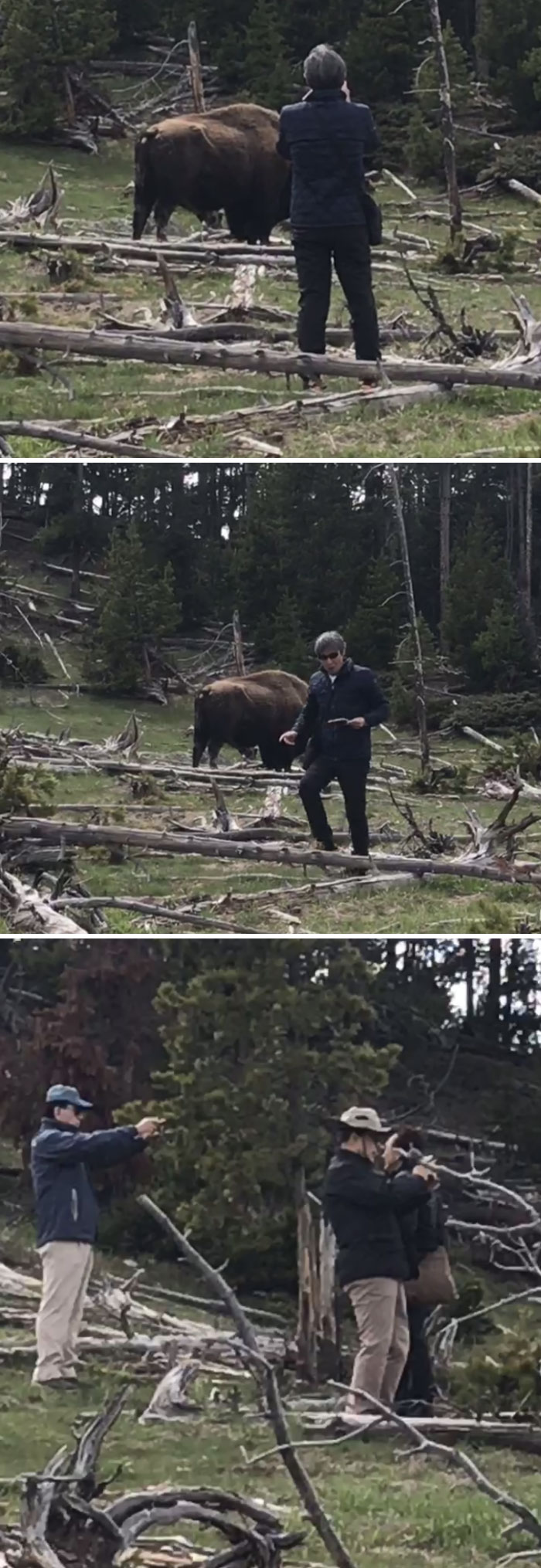 Tourists Doing Stupid Things At Yellowstone National Park