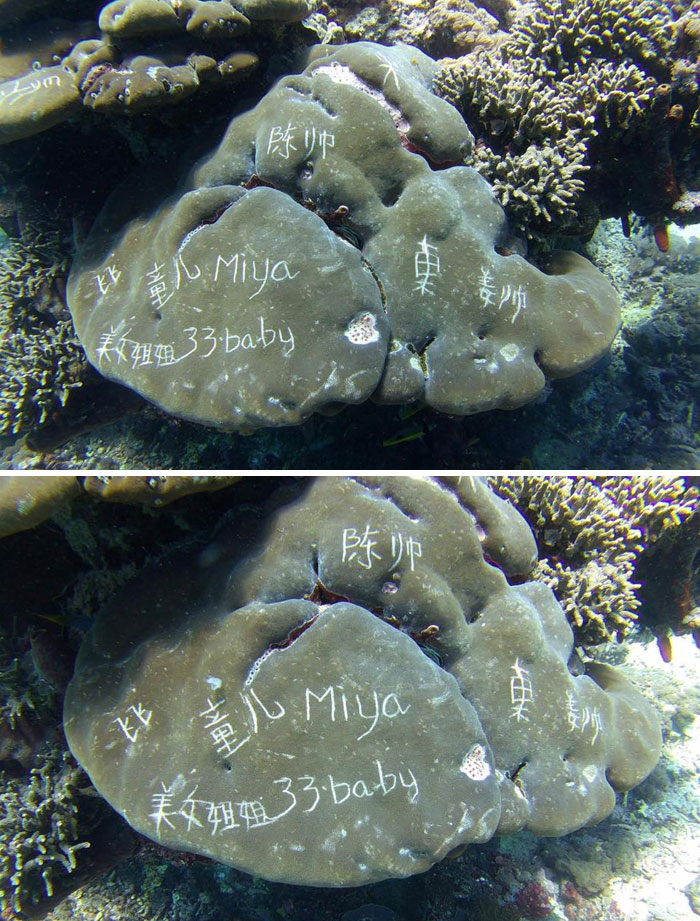 Photos Taken By Bali Dive School Shows Coral Defaced With Writing Etched In