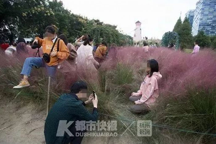 Tourists' Selfie Mania Destroys Rare Pink Grass