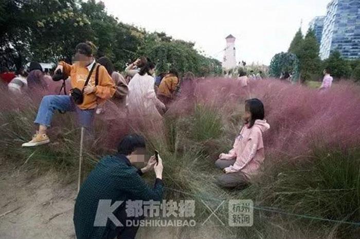 Tourists' Selfie Mania Destroys Rare Pink Grass