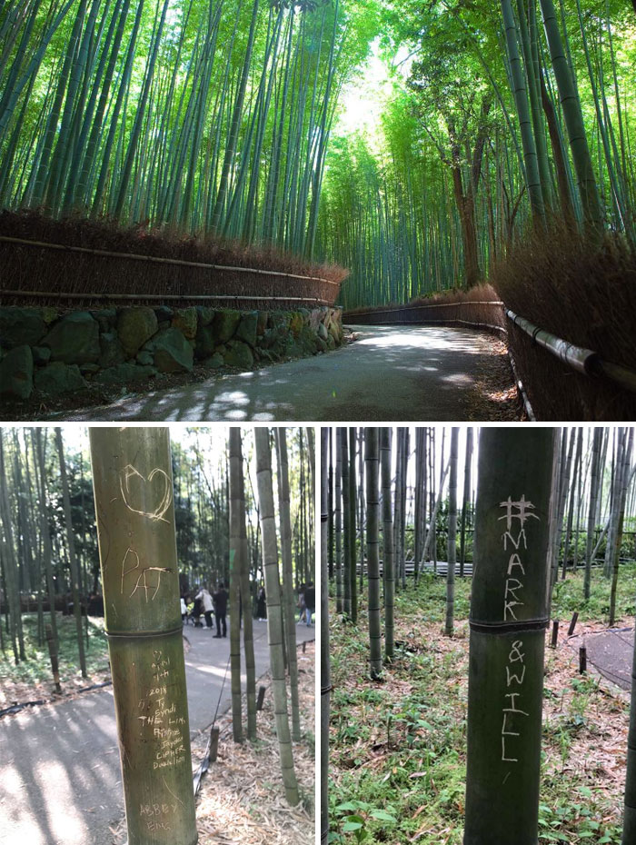 Japanese Bamboo Forest 'Cries' After Tourists Vandalize Trees