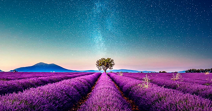 Breathtaking Aerial Photos Of A Lavender Field In Southern France By Samir Belhamra (12 Pics)