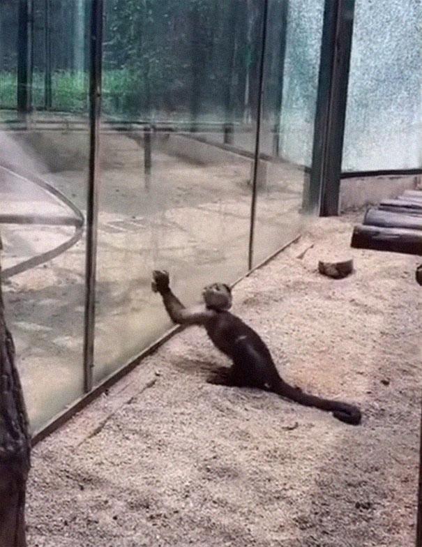 Обезьяна в зоопарке