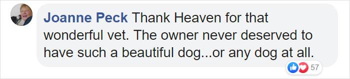 Heartless Owner Demands Overweight Retriever Be Put Down, Vet Finds Him A New Loving Home
