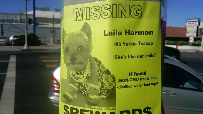 For Someone Desperately Seeking Their Lost Dog, They Sure Are Placing Alot Of Demands On The People That Find Her