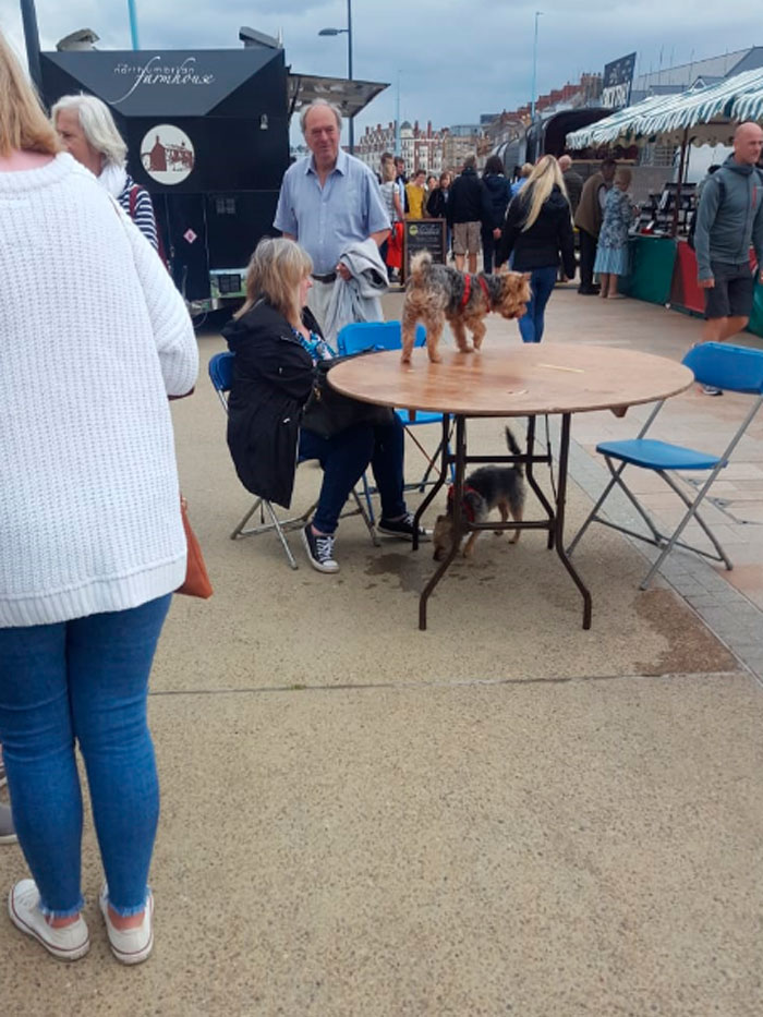 Dog On A Table At A Food Festival