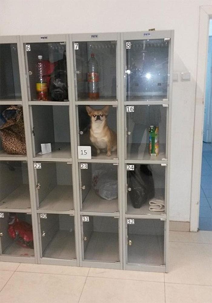 Alguien ha metido aquí a su perro mientras hace sus compras