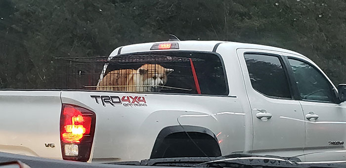 People Who Drive Around With Their Dog In The Truck Bed (It Was Raining)