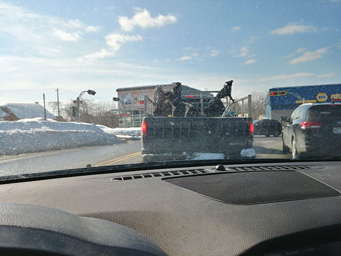 Traveling With 4 Dogs And A Cat In The Back Of A Truck At -25 °c