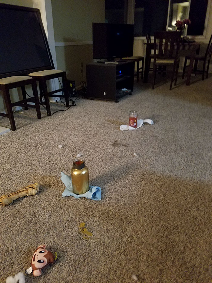 "I Asked My Roomate Why There Were 2 Candles On Our Carpet. Apparently Her Dog Puked And She Didn't Have ""Time"" To Clean It"