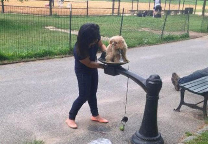 Woman Uses A Drinking Fountain As A Doggy Bidet