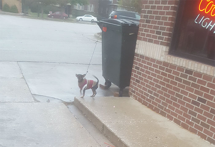 Tied To A Dumpster Outside A Liquor Store While The Owner Was Inside Playing Video Poker(35° And Raining)