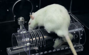 Research Shows That Rats Show Empathy, But Are Selective Regarding Fur Color