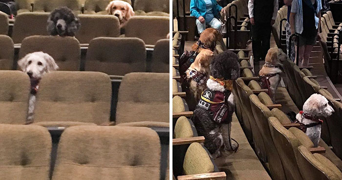 These Service Dogs Attended A Relaxed Performance Of 'Billy Elliot' To Learn How To Behave In A Theater