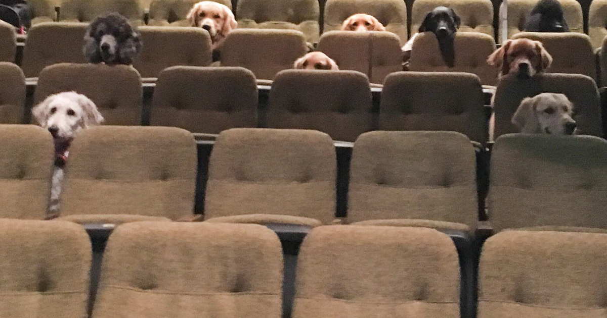 These Service Dogs Attend A Private Performance Of 'Billy Elliot' To Learn Theater Behavior