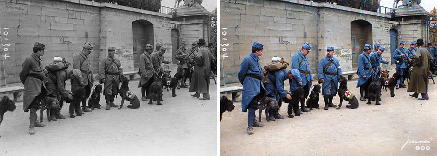 French Soldiers & Red Cross Dogs Before Departing For The Front Tuileries Gardens (Place De La Concorde Gate) Paris, France, 1915