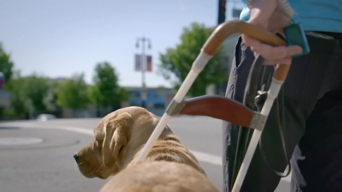This Adorable Netflix Dogumentary Follows 5 Labrador Puppies' Training To Become Pawsome Guide Dogs