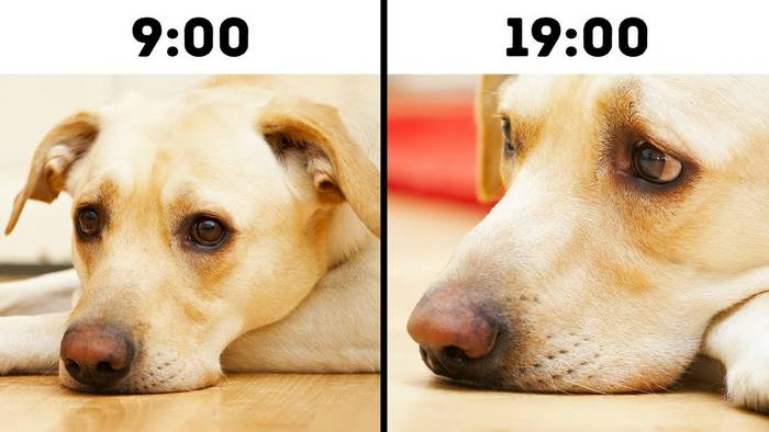 11 Ways You May Be Unintentionally Shortening Your Dog's Life