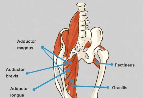 12 tips evektif to Treat a Groin Injury2