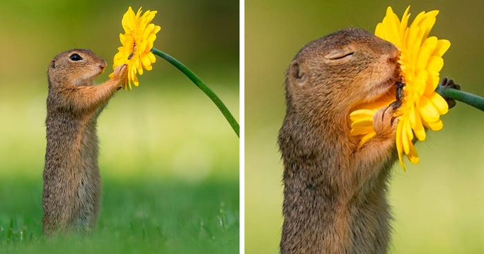 Photographer Captures The Precious Moments Of What Happens In Nature When No One's Around (30 Pics)