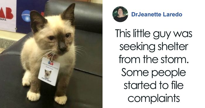 Office Hires Homeless Cat Taking Shelter In Their Building So People Can No Longer Complain About It