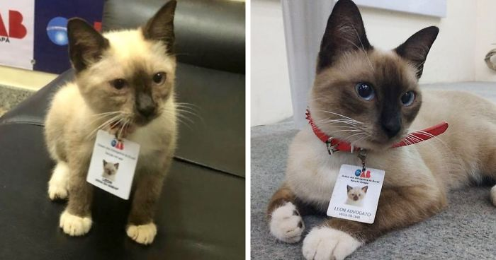 Office Shuts Down People Complaining About A Stray Cat In The Building By Hiring It