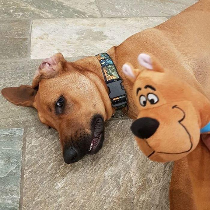Scooby-Doo-Look-A-Likes