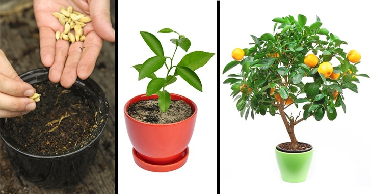 8 Fruit Trees You Can Grow From the Seeds and Pits of Your Own Fruit