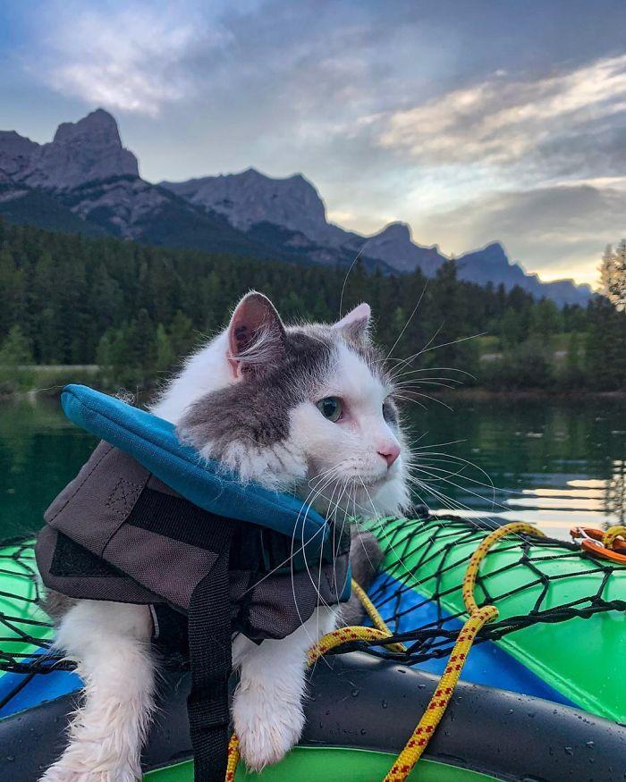Gary The Adventure Cat