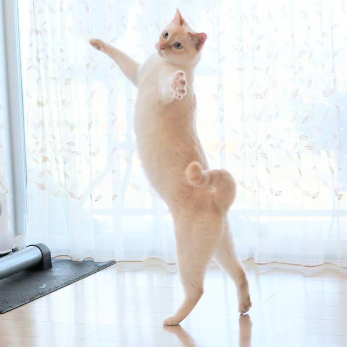 Dancing Ninja Cat